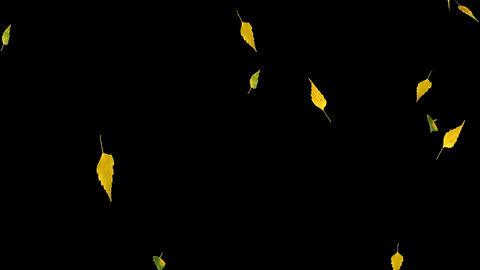 Autumn Leaves Overlay 08 GIF