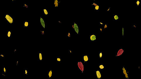 Autumn Leaves Overlay 09 CG動画