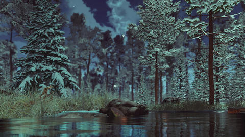 Not frozen stream in snowy winter forest at misty dusk Live Action