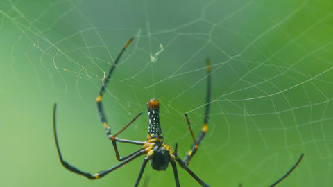A spider sits on a web in the forest. spider on web with green blurred background Live Action