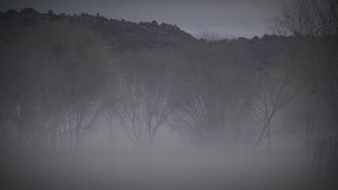 Eerie Fog with Trees and Lake Slow Pan Live Action
