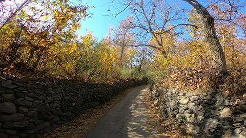 The Autumn Nature 실사 촬영