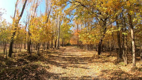 The Autumn Nature Stock Video Footage
