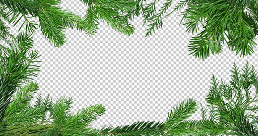 Green branch of pine tree isolated on black and red background screen CG動画
