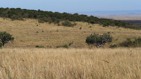 Savannah landscape in Tsavo Park, Kenya, Slow motion Live Action