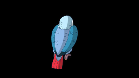 Blue Parrot Turns. Classic Disney Style Animation with Alpha Channel Animation