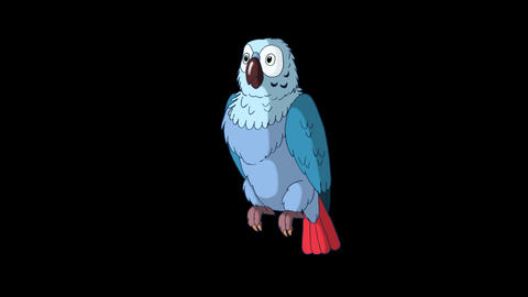 Blue Parrot Wakes Up. Classic Disney Style Animation with Alpha Channel Animation