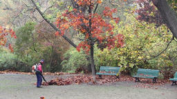 Gardener working with leaf blower in the park Live Action