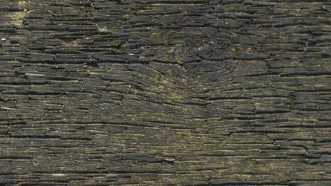 weathered wood texture Live Action