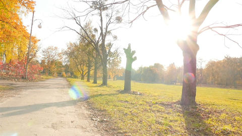 Beautiful trees with yellow leaves. Long scenic road. The bright rays of the sun Live Action