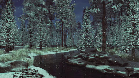 Calm winter forest landscape at frosty dusk with snowfall Live Action