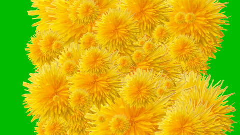 234 3d animated background with flowers on green screen background Animation