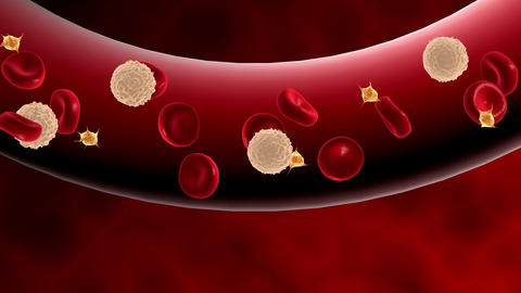 Blood cells moving through blood vessel Animation