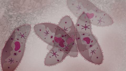 Microscopic visualization of paramecium Animation