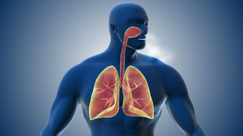 Visualization of human respiratory system Animation