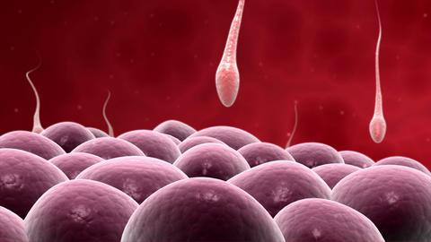 Microscopic visualization of fertilization Animation