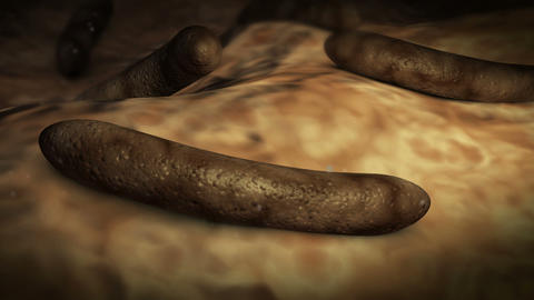 Parasitic worms inside human body Animation