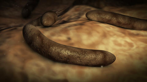 Parasitic worms inside human body Stock Video Footage