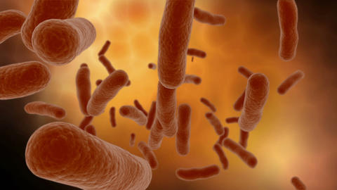 Microscopic visualization of bacteria Animation