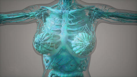 model showing anatomy of human body illustration Live Action