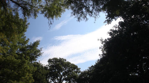 Cloud and sky surround by trees Footage