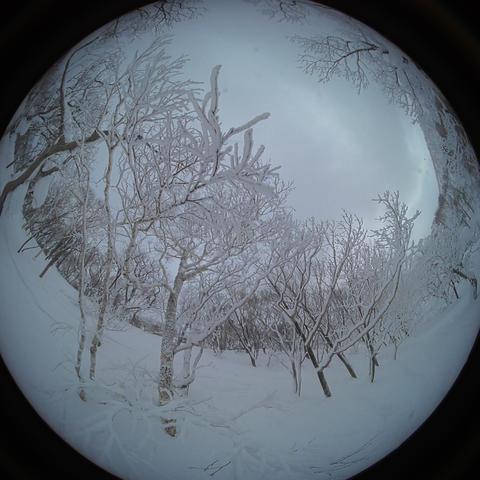 japow powder snow Snow mountain forest landscape Rime landscape 3 Live Action