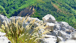 Spikelets grass moves wind nature background 4k video. Mountain rock peak Footage
