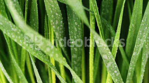 Water droplets on green grass Live Action