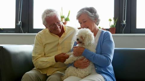 Senior couple pampering dog Live Action