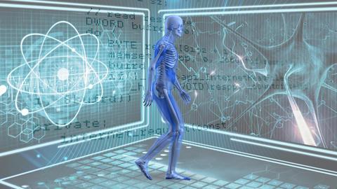 Human anatomy walking Stock Video Footage