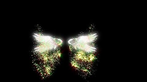 Angel-wing Animation