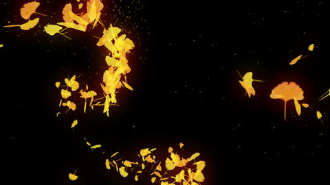 Spin of autumn leaves,Gingko,CG Animation Animation