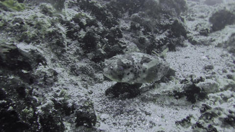 Close up of tropical fish near sea bed Footage