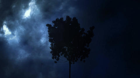 Thunder and tree at night Animation
