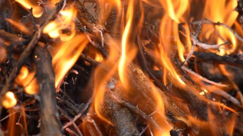 Bonfire Close Up Fire Live Action