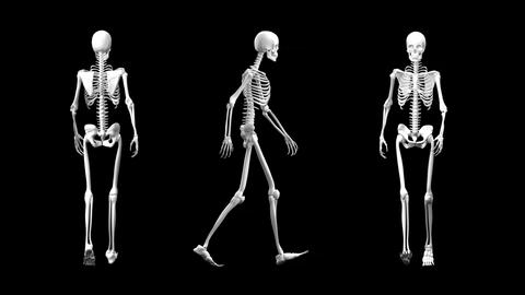 Different view of a walking skeleton Animation