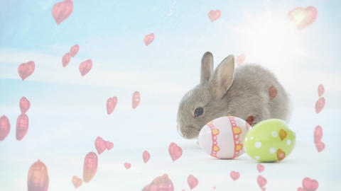 Rabbit animation with little pink heart and Easter eggs Animation