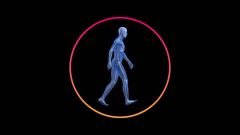 Digital animation of a transparent human with skeleton waking Animation
