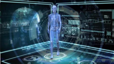 Human anatomy walking Animation