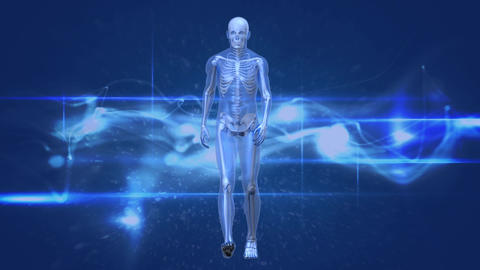 Human anatomy walking Animation