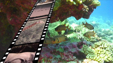 Film strip and under the water Animation