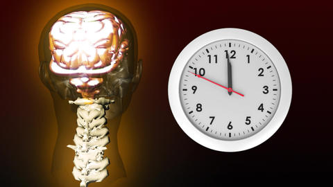 Anatomy of head and clock Animation