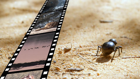 Film strip and a bug Animation