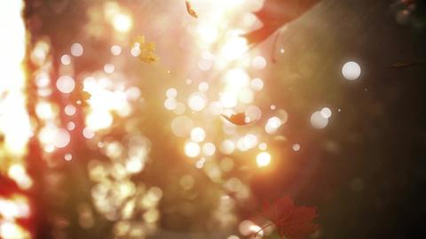 Dried maple leaves falling CG動画