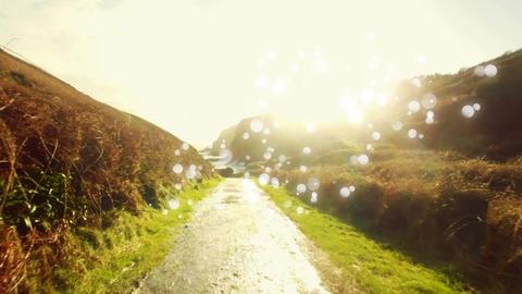 Bokeh lights in a field Animation