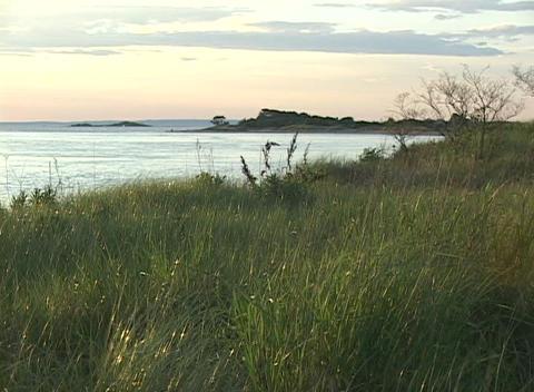 Medium shot of a grassy seashore Stock Video Footage
