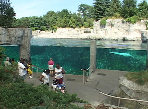 Aquarium visitors watch a beluga whale swim Stock Video Footage