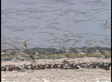 Seagulls land on the beach Stock Video Footage