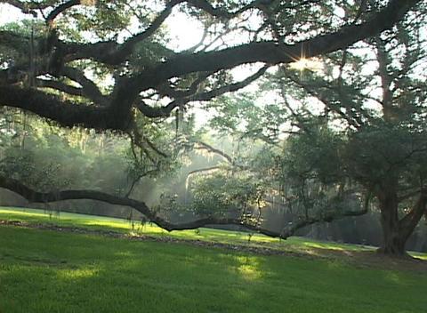 Sunlight shines through an idyllic forest Stock Video Footage