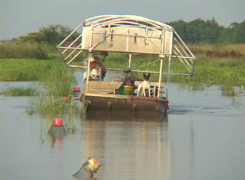 A fisherman on a boat rides through swampland checking... Stock Video Footage